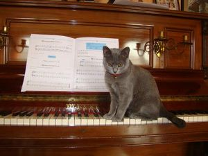 Divertissement : la chatte musicienne