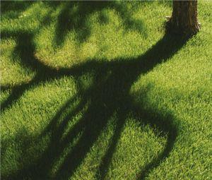 Misterbricolo entretient sa pelouse au printemps ...