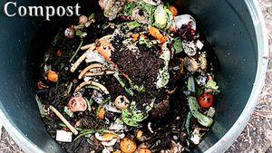 Misterbricolo hésite entre un bon terreau et du compost ...