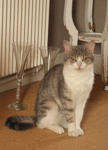 ZINNIA (femelle, née début 2012) - adoptée