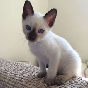 [Adoptions] Sri Siam