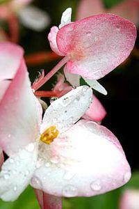 Le corps des fleurs