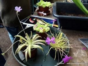 atelier du jardin des plantes le 18 octobre entretien gratuit des plantes carnivores vivre. Black Bedroom Furniture Sets. Home Design Ideas