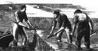 L'ostréiculture en Bretagne