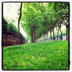 L'avenue de Paris © Versailles in my pocket
