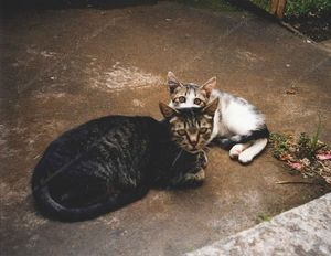 Histoire de Chats : Patapouf &amp&#x3B; Famille