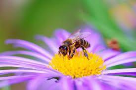 Que l'âme de l'abeille investisse à nouveau et en nombre nos campagnes et nos montagnes.