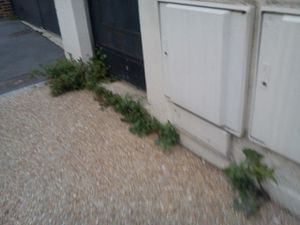 Protégeons les herbes folles de la vindicte municipale!