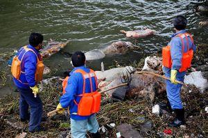 17 photos déchirantes des effets de la pollution sur le monde animal