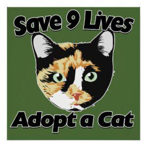 Pourquoi dit-on que le chat a 9 vies ?
