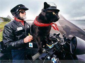 Max et Rastus au guidon de leur BMW