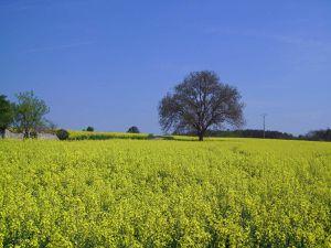 Roland de Lassus: Dis moi beau printemps