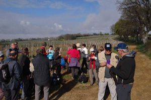 Bourg  sur gironde : balade de la Libarde