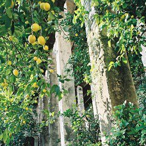 Die Limonaie am Gardasee
