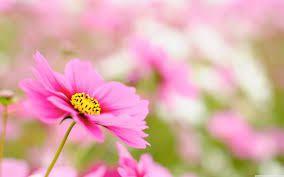Una flor no fa estiu,...