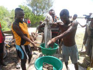 Pêche aux poulpes : Manque de collecteurs à Antsiranana