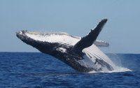 Des baleines à Mahajanga