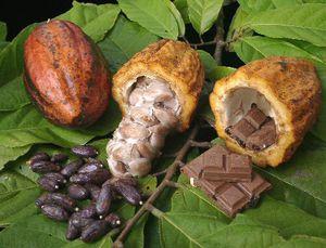 Chocolat: Madagascar à l'affiche