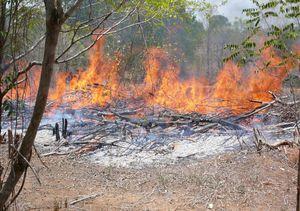 Déforestation: Difficile à stopper