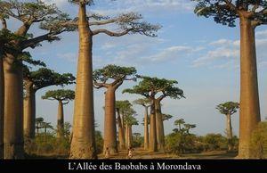 Madagascar, Destination trop onéreuse