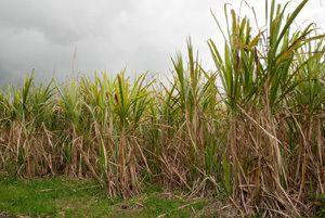 Filière éthanol – Nécessite absolue d'une loi sur « le toaka gasy »
