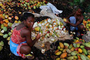 Cacao et vanille – Des grosses pointures soutiennent nos agriculteurs