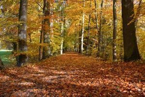 L'automne s'installe...