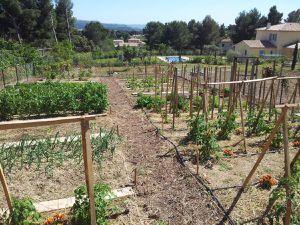 2013 - Un potager en permaculture