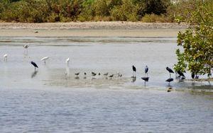 Ecotourisme: A la découverte de la réserve naturelle communautaire de Palmarin