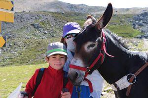 En compagnie d'un âne : un tour du Queyras (Hautes-Alpes)