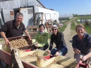 Samedi 18 avril, le chantier plantation des pommes de terre