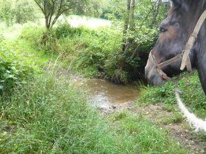 beau Chemin, beau ruisseau.