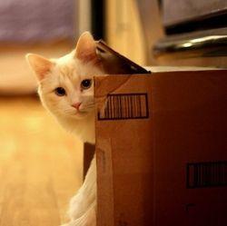 Projet déménagement : Le stress !