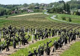 Le vignoble de Gaillac