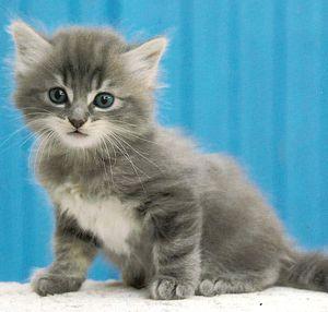 Amour de chaton