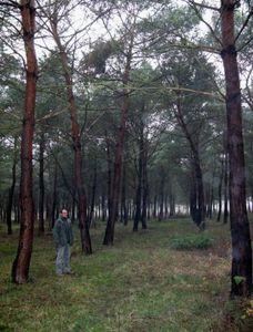 Les vols de câbles en cuivre au parc du Sausset d'Aulnay-sous-Bois ont coûté 200000 euros au département en 2014
