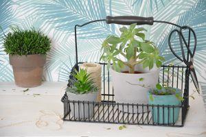 10 diy : un jardin dans ma maison!