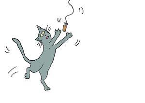 Enquête : chat domestique et biodiversité