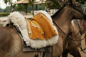 Chevaux pantaneiros et cavaliers peoes
