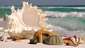 Les poètes de la mer tout autour du monde...