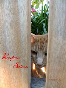 http://brica-brocamoi.eklablog.com/pour-une-journee-a124266632