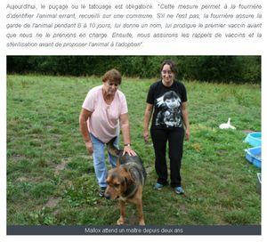 l'association &quot&#x3B;le Refuge&quot&#x3B; lance un appel à l'adoption de chats et de chiens