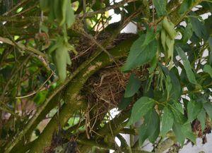 017: Les oiseaux et leur nid