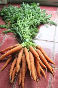 Mises en bouche autour d' une botte de carottes fanes