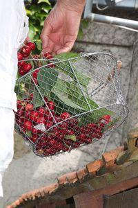 Glace aux cerises du jardin