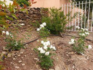 Suite des travaux de plantation par l'entreprise Veyret