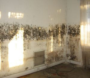 mold on walls from a water damaged home