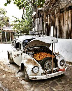 Etat de Oaxaca - Côte pacifique : Mazunte et Zipolite