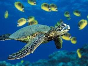 J'aime les tortues