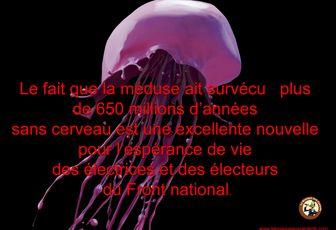 Humour du jour ; la méduse et les électeurs du FN